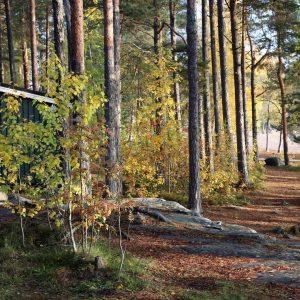 Autumn in Finland